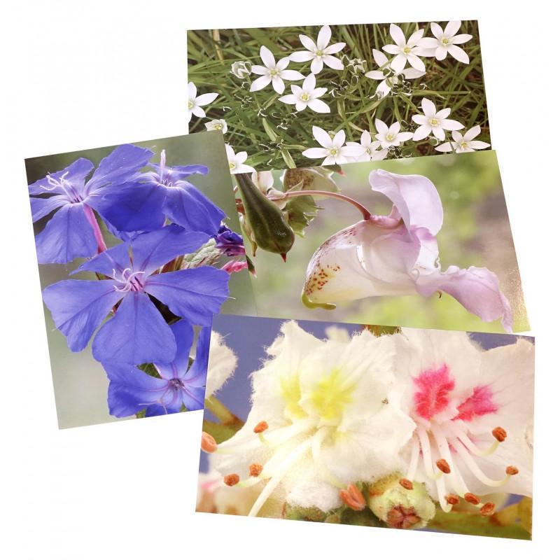 Baha ziedu atklātņu komplekts