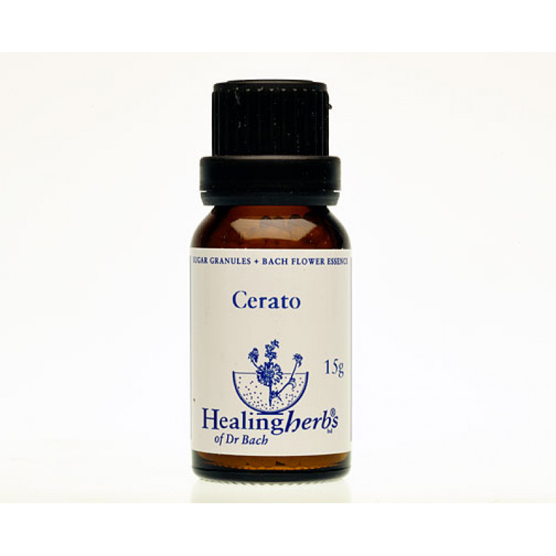 Ceratostigma / Cerato, 15 g