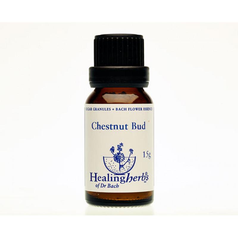 Zirgkastaņas pumpurs / Chestnut Bud, 15 g