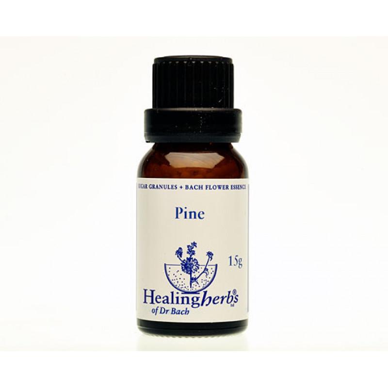Priede / Pine, 15 g