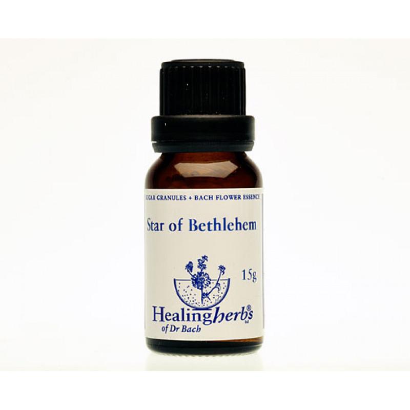 Baltstarīte / Star of Bethlehem, 15 g